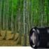 「ほんとに汎用性があります」SEL50F14Z(Planar T* FE 50mm F1.4 ZA)のレビュー(評価)